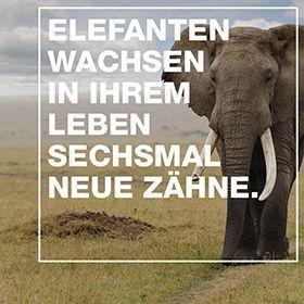 20.02_Engagement_Elefanten Zähne