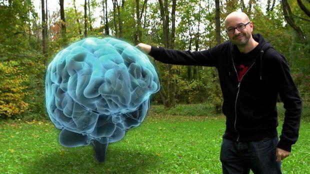 Web Phenomen - Gehirnmagnet