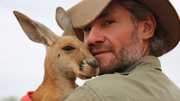 Nachdem Känguruh-Baby Titch im Autralischen Outback von Wildrettern völlig en...