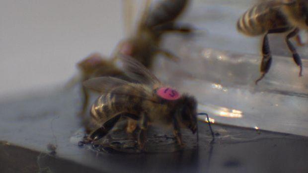 Sprache der Insekten