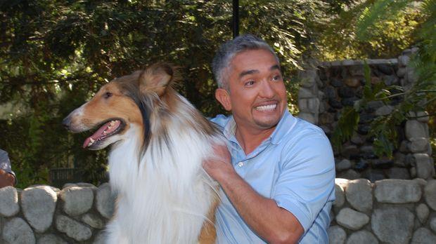 Cesar Millan stattet ehemaligen Problemfällen einen Besuch ab, um zu sehen ob...