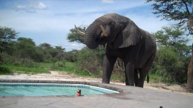 Abenteuer Leben - Abenteuer Leben Am Sonntag - Da Steht Ein Elefant Am Pool - Die Schrägsten Urlaubs-pannen
