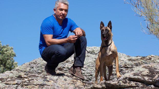 Cesar Millan macht es sich zur Aufgabe, Janna zu heilen, ihm neue Motivation...