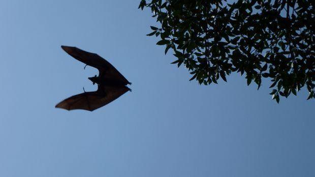 Halloween-Fledermaus basteln_Pixabay