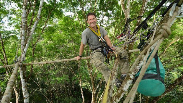 In den Baumwipfeln des Guyana Dschungels baut Steve Backshall sein Lager auf,...