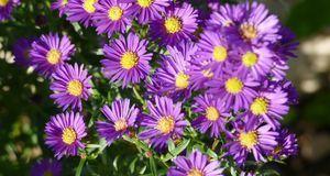Gartengestaltung_2016_05_10_Herbststauden_Bild 2_fotolia_Caroline Schrader