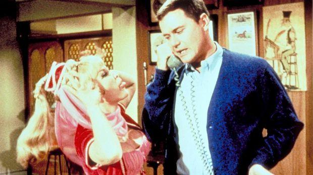 Jeannies (Barbara Eden, l.) kleines Zauberhündchen Djinn-Djinn dringt unerlau...