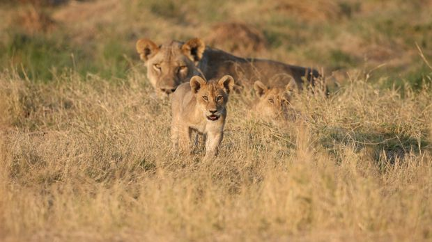 Im South Lunagwa Nationalpark in Sambia ist die Trockenzeit beinahe vorüber....