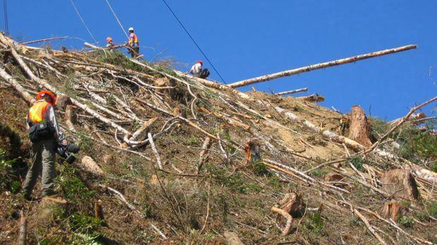 Sechs Teams von Holzfällern kämpfen in einem zermürbenden Wettstreit mit sich...