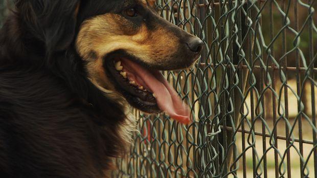 Sophia hatte die schlechtesten Erfahrungen, die Hunde mit Menschen erleben kö...