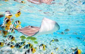 Sommerurlaub_2015_07_15_Bora Bora Urlaub_Bild 3_Fotolia_BlueOrange Studio