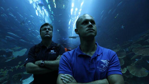 Profis im Umzug von Haien: Lyle Squire Junior (l.) von Cairns Marine und Paul...