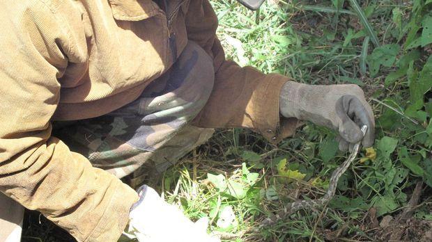 Schildkröten-Mann Ernie Brown Jr. fängt sämtliche wilden Tiere mit seinen blo...