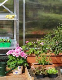 Zum Überwintern eignet sich unter anderem ein Wintergarten. Doch Achtung: Die...