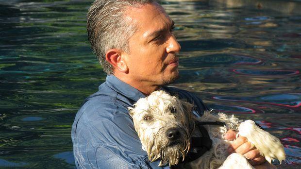 Cesar kümmert sich um den Terrierwelpe Charlotte ... © Rive Gauche Intern. Te...