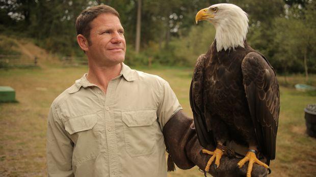 In Britisch Kolumbien filmt Steve Backshall mit einem Weißkopfseeadler ... ©...
