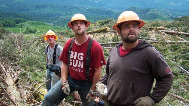 Der Wettkampf zwischen den Holzfäller-Teams wird immer härter: Während sich b...