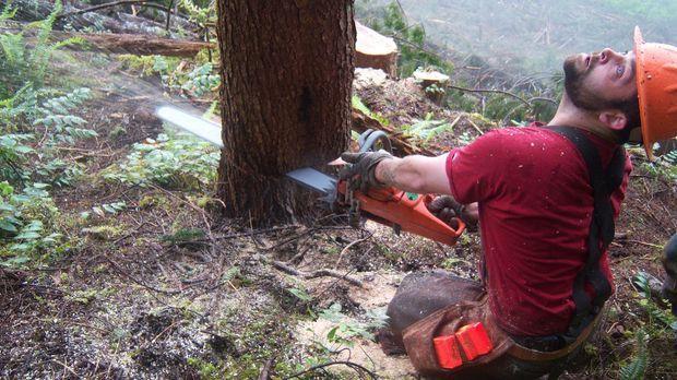 Während die anderen Holzfäller-Teams sich mit internen Machtkämpfen und sonst...
