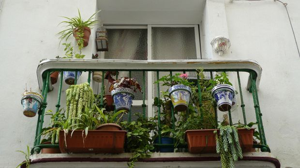 Balkon-Pflanzen-pixabay