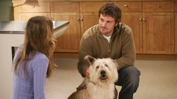 Während Derek private Probleme hat, ist Meredith (Ellen Pompeo, l.) gut gelau...