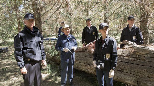 Als ein Navy-Offizier im Ruhestand ermordet wird, beginnen Gibbs (Mark Harmon...