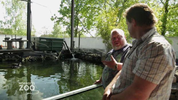 Norberts Zoo - Der Größte Tierladen Der Welt - Norberts Zoo - Der Größte Tierladen Der Welt - Vom Teich In Norberts Reich